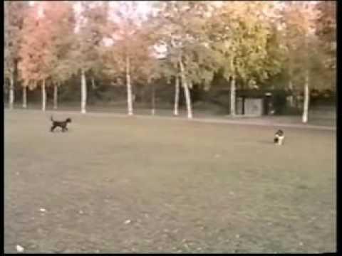 Turid Rugaas Calming Signals DVD Clip - DTB788