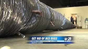 Battling bed bugs with extreme heat