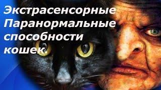 Экстрасенсорные способности кошек.  Паранормальные способности котов.