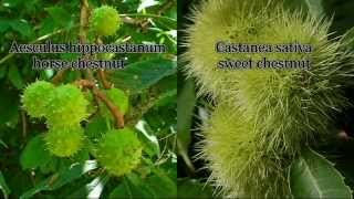 """Chestnut"" side-by-side comparison - Horse and Sweet"