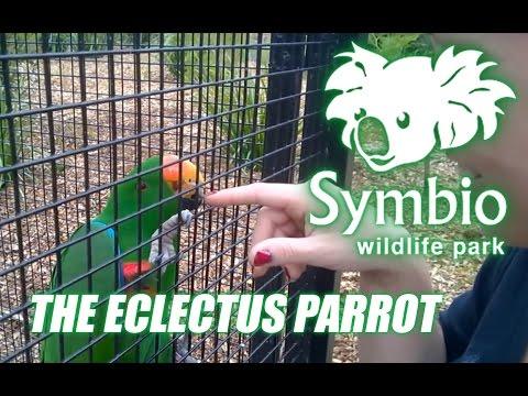 Symbio Wildlife Park - The Eclectus Parrot