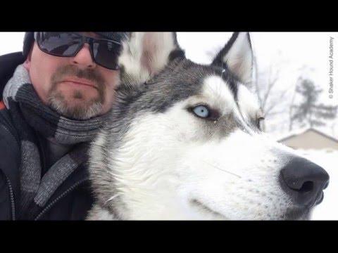 Barking and marking: decoding the language of dogs | Chris Ramsay | TEDxClevelandStateUniversity
