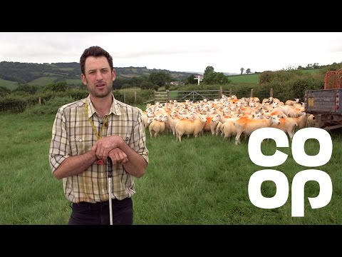 Co-op Food | Meet the Producer - British Lamb