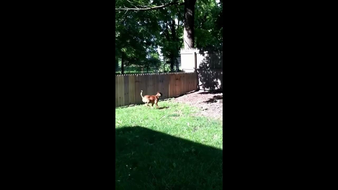 Construye una valla para que su perro no se escape y pasa esto