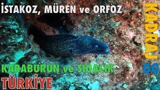 İstakoz Müren Orfoz Karaburun Sığacık Türkiye Kadraj Dünyagezegeni