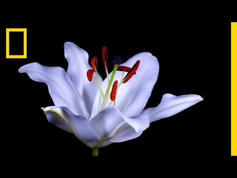Time-Lapse: Watch Flowers Bloom Before Your Eyes | Short Film Showcase