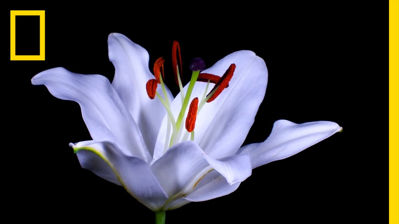 Time Lapse Watch Flowers Bloom Before Your Eyes Short Film