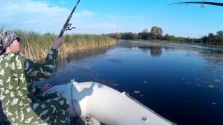 Ловля краснопёрки в Переволоках. Fishing in Perevoloki.