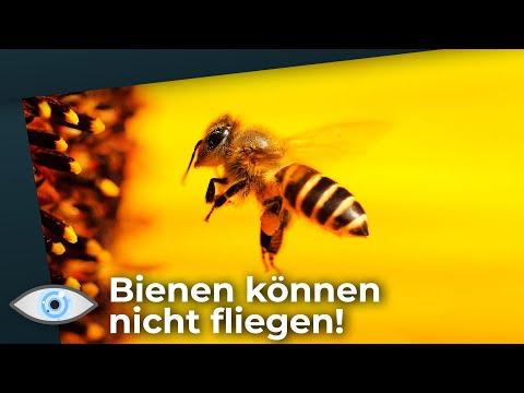 Bienen können nicht fliegen! Du kannst das Geheimnis des Bienenflugs lüften!
