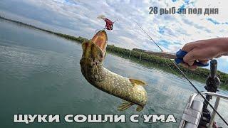 Бешеный клёв щуки на спиннинг. Рыбалка на щуку с лодки