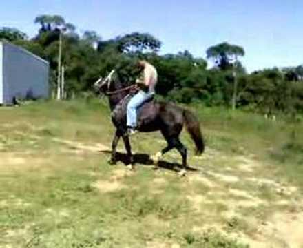 junior de cavalo