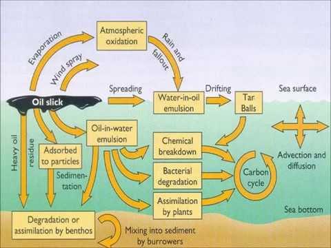 Marine Pollution: OIL