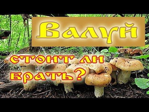 Валуи стоит ли собирать эти грибы?