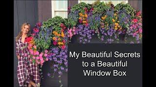 My Beautiful Secrets to a Beautiful Window Box | Container Gardening