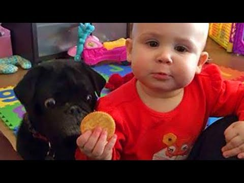 Adorable Babies 👶 Playing With Dogs 🐶 and Cats 😽 Funny Babies Compilation 2019