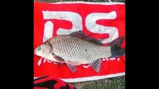 Карась гигант или рыбалка на озере.