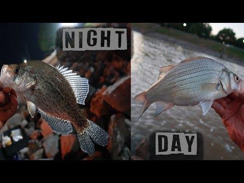 Sardis Reservoir White Bass & Crappie Fishing (DAY & NIGHT) Adventure