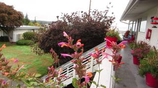 Balcony Garden for Hummingbirds (with list of flowering plants)