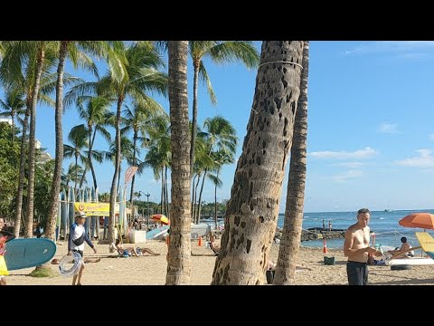 Hawaii Stream 🌞🌺