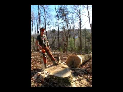 An Interview with Ben Harris, owner of Sinking Creek Horse Logging