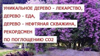 Уникальное дерево   лекарство, дерево   еда, дерево   нефтяная скважина, рекордсмен по поглощению СО