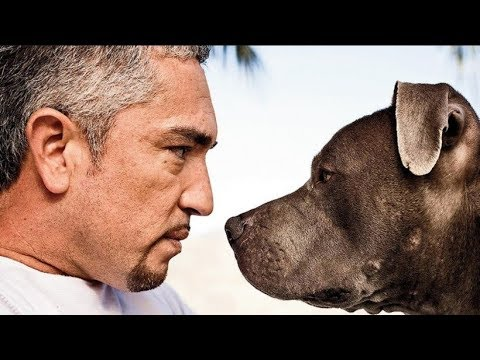 Download Cesar Millan - The Real Life Story of the Dog Whisperer - Biography Documentary Films