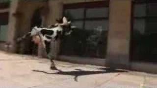 deli inek i like to movit movit