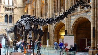 Top 10 Most AMAZING Dinosaur Discoveries!
