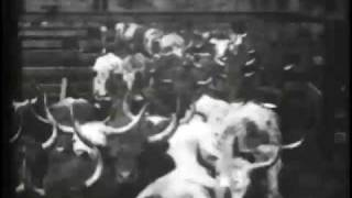 Cattle Driven to Slaughter