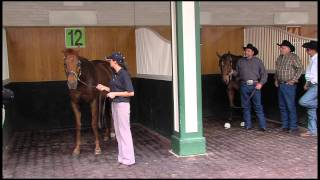 Mine That Bird and Funny Cide beneath the Twin Spires