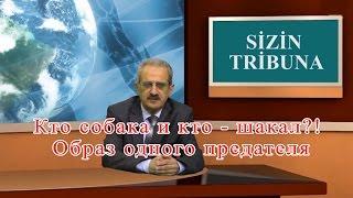 Кто собака и кто - шакал?!  Образ одного предателя : Talyshistan Tv 14.04.2017 News