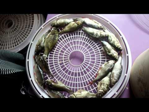 Как вялить рыбу в сушилке