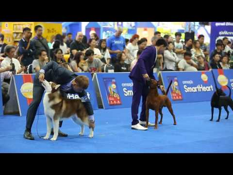 SmartHeart presents Thailand International Dog Show 2017
