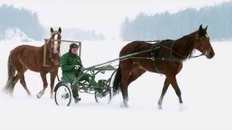 Hevosen valmennuksen lähtökohdat