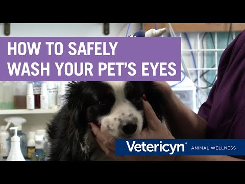 How To Safely Wash Your Pet's Eyes With Vetericyn Plus – Veterinarian Dr. Mindy