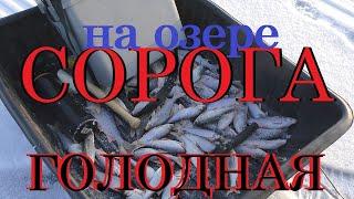 Особенности зимней рыбалки Ловля плотвы на озере