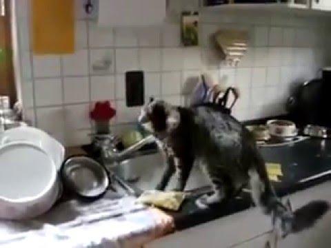 Katze hilft beim Abwasch