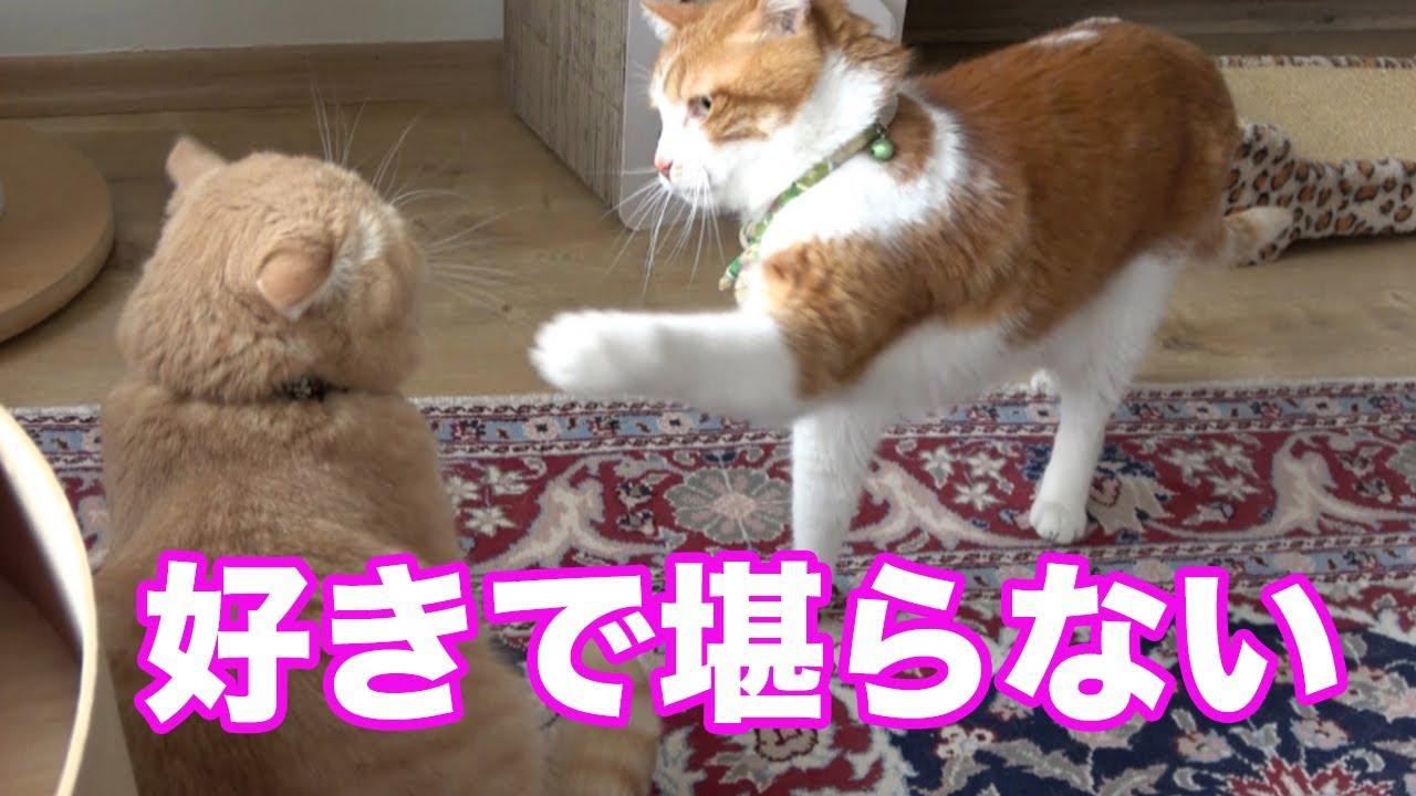 ボーイズラブなオス猫!健気な猫とつれない猫の様子が可愛いくて笑