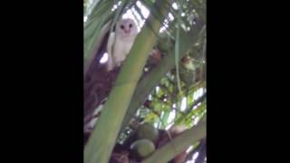 world,s largest owl!!!!!!!!!!!!!!!!!!!!!!!!!!!