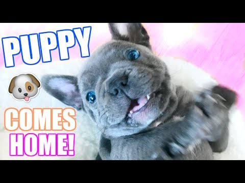 PUPPY COMES HOME FOR THE  FIRST TIME!! 🐶 CUTEST PUPPY EVER!
