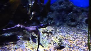Den Blå Planet (Seahorse)