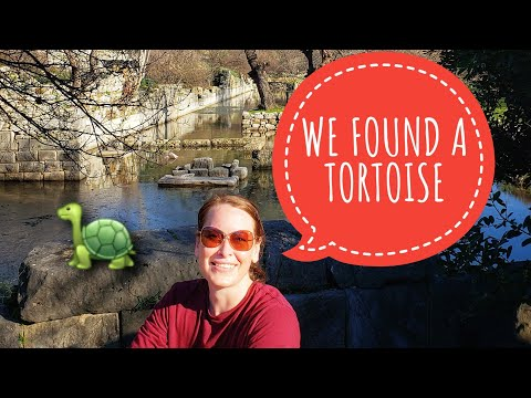 Found a Tortoise at the Flooded Ruins of Kaunos. Dalyan, Turkey. #turkey #travel #ruins
