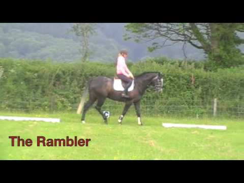 The Rambler from Exmoor Eventing