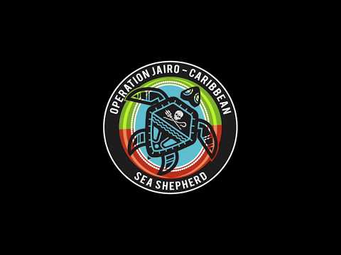 Barbuda Officials join Sea Shepherd on patrol looking for nesting turtles