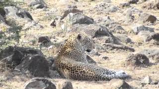 Masai Mara Safari, Kenya Nov. 2013