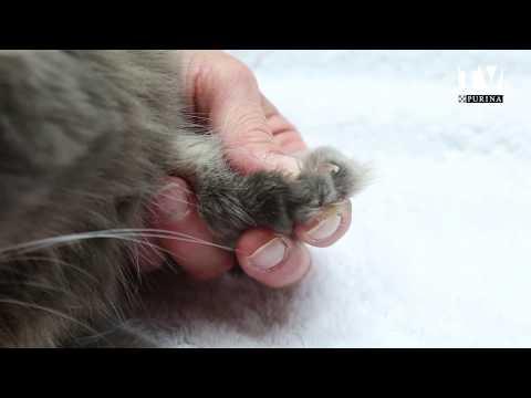 Savoir Couper Les Griffes De Son Chat