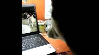 Собака смотрит фильм про собак