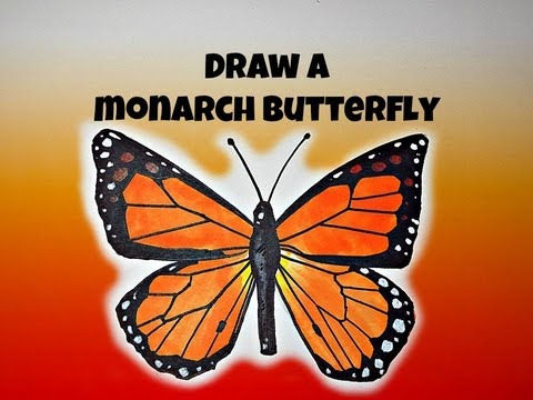 How To Draw Monarch Butterfly - YouTube