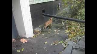 Рыжий кот не выдал свою нору