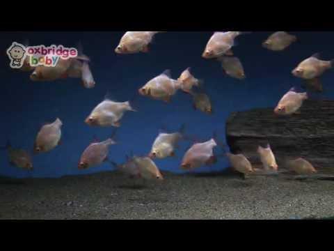Смотреть клип Dancing Fish by Oxbridge Baby (My First DVD) онлайн бесплатно в качестве